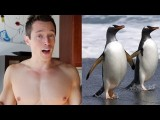 Brokeback Iceberg: Gay Penguins!