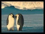 Lots Of Panda 's, Penguins, Cute Birds And Other Animals.The Song Is - I Feel Good Around You By D&A