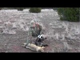 American Wildlife Authority Jason Eastwood Coyote Hunting